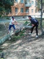 Очищаем дворы от аварийных деревьев